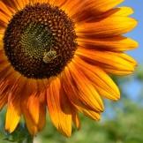 Čebelarstvo  Žvikart