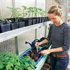 Če imate rastlinjak, lahko zgodaj začnete sezono. Že februarja lahko predvzgojite solate, zelenjavo in poletne rože.