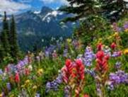 http://www.rtvslo.si/_up/photos/2015/04/14/u2700-268145_mount_rainier_national_park_mountains_meadow_flowers_1920x1200_thumb.jpg