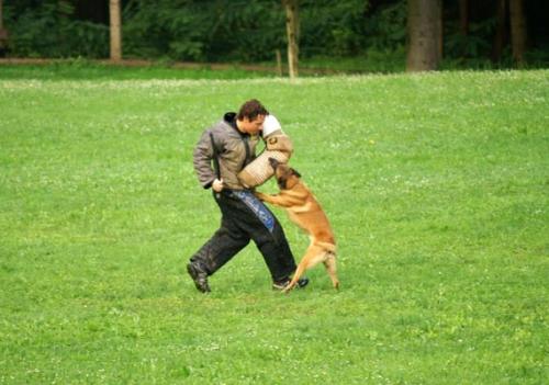 Tekmovanje šolanih psov za pokal VOMAR