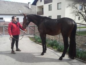 »Imamo dobre konje in dobro rejo!«