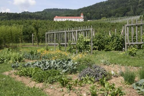 Zelenjavno sadni vrt po permakulturnih zahtevah