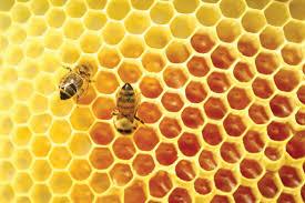 Rezultat iskanja slik za čebele med slike