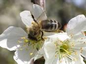 Rezultat iskanja slik za čebele opraševanje slike
