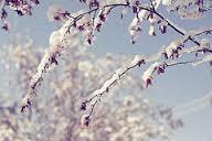 Rezultat iskanja slik za pomladni sneg