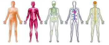 Rezultat iskanja slik za človeško telo