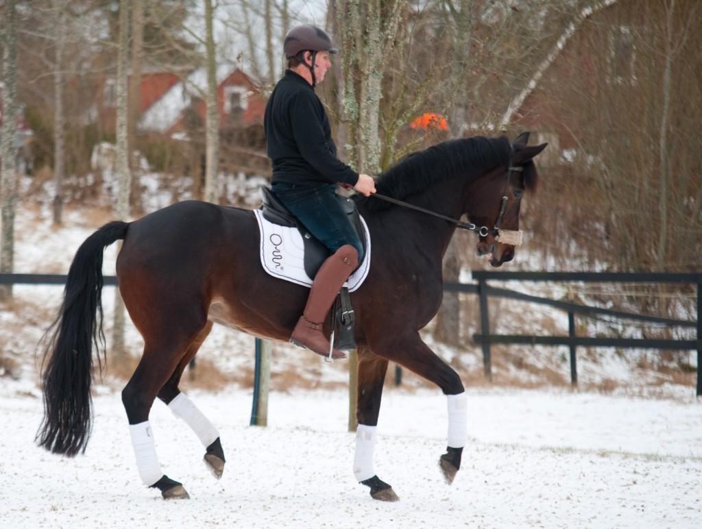 Per Waaler skrbi za dobrobit konj.