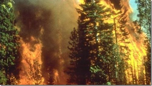 požar črni kal