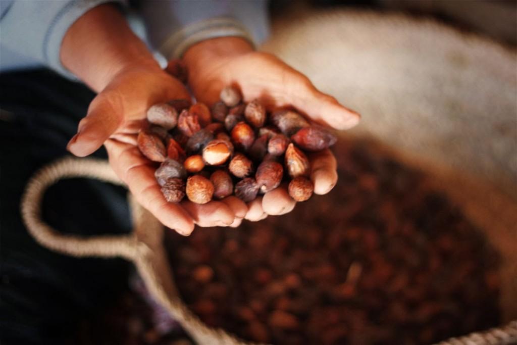 Suhi plodovi, v katerih se skrivajo semena bogata z oljem (vir: rechercheorganics.blogspot.si)