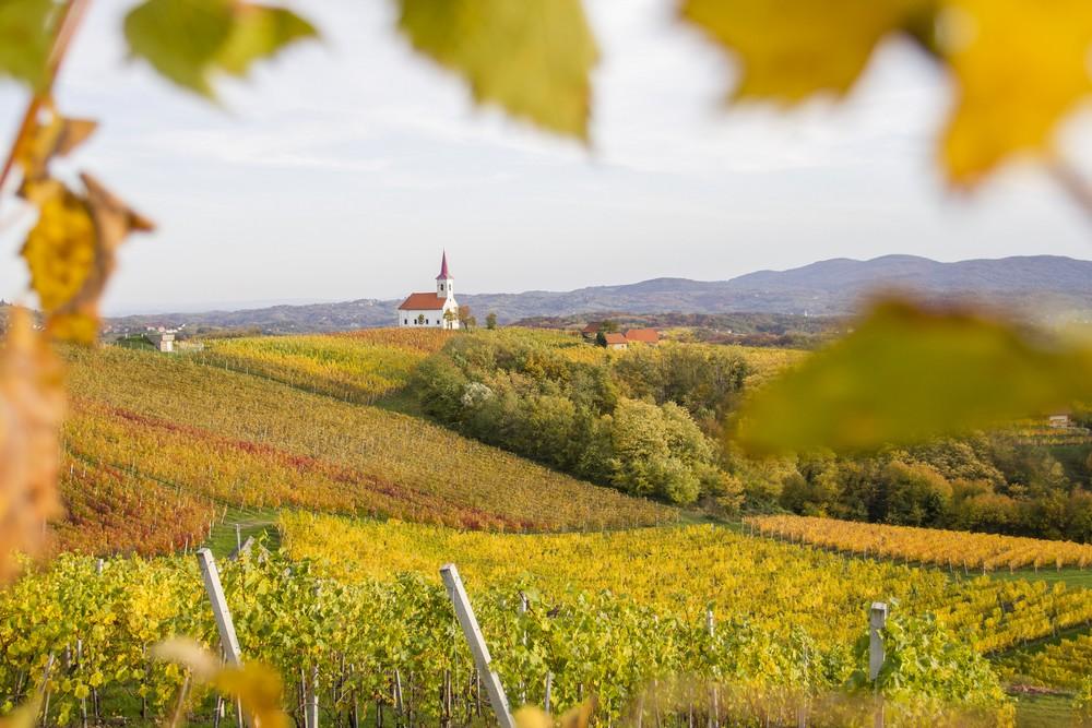 tŕtje- vinograd