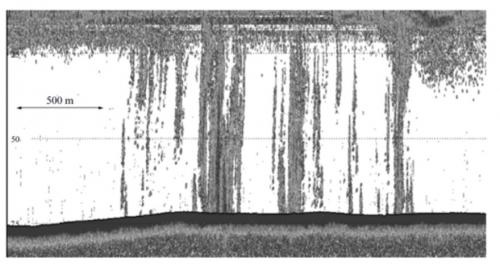 Sonarna slika enega od velikanskih izbruhov metana iz dna priobalnega Vzhodnosibirskega morja