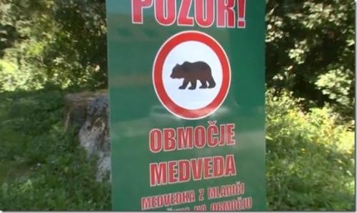 odstrel medveda