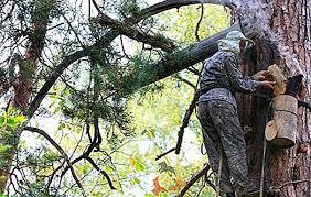Rezultat iskanja slik za čebelji panj na drevesu