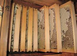 Rezultat iskanja slik za čebelja zalega slike
