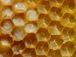 Rezultat iskanja slik za čebelje ličinke slike