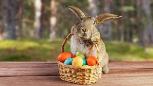 Rezultat iskanja slik za velikonočni zajček slike