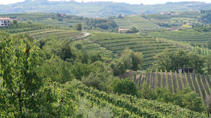 Brda so prvo slovensko vinarsko-turistično območje