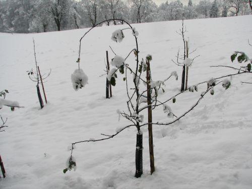 Spomladanski sneg je navadno težak.