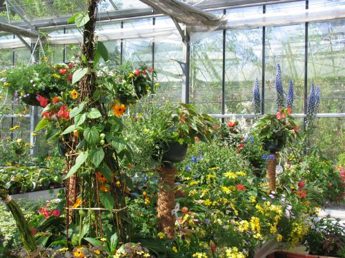 Zasaditve čakajo v vrtnariji na toplejše vreme.