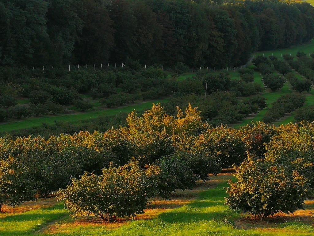 Nasad leske kmetije Krajnčič