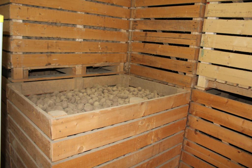 Kuraltovi pridelujejo tudi krompir na treh hektarjih površin