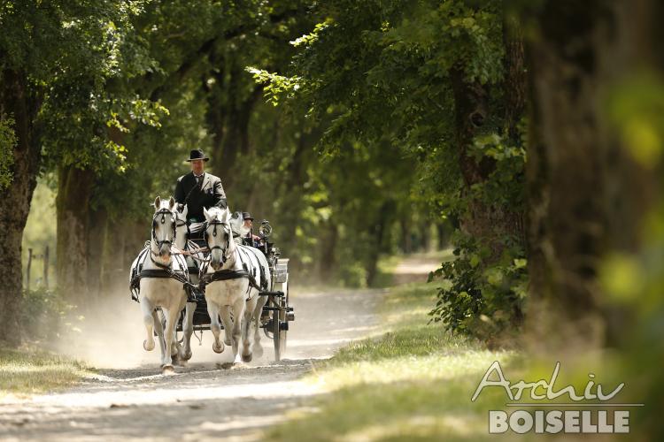 Kobilarna Lipica - foto Gabriele Boiselle - Edition Boiselle