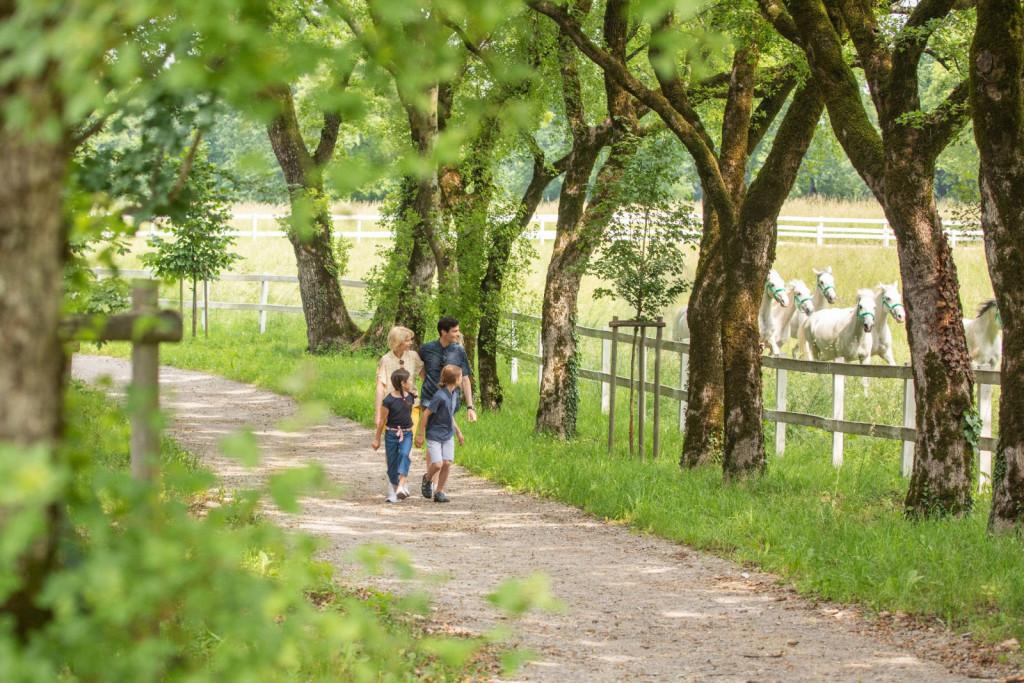 Kobilarna Lipica - foto Jošt Gantar - projekt VisitKras