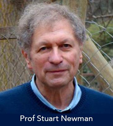 Prof Stuart Newman