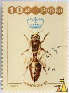 Queen Western Honeybee, Polska, Poland, stamp, insect, bee, K Sliwka, PWPW, 87, Apimondia'87, 10 Zl, Apis mellifera, queen