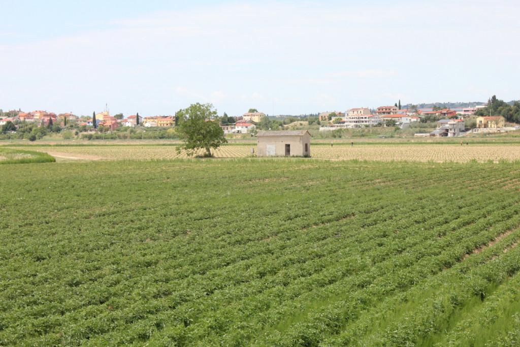 Obdelane površine Sečoveljske doline.