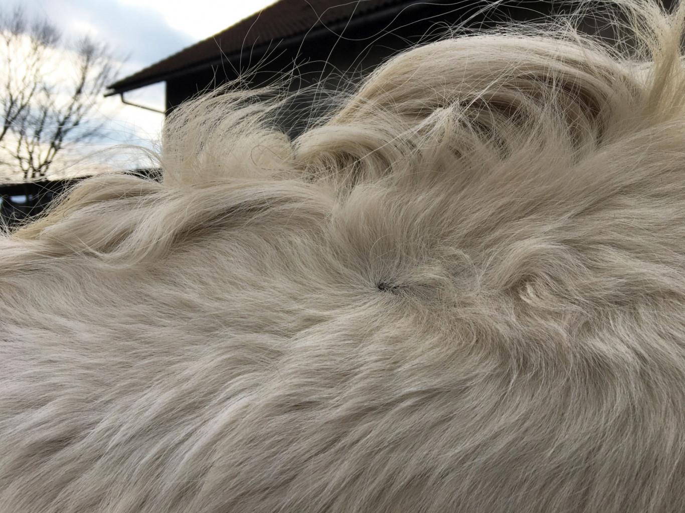 Če se vrtinec na vratu pojavlja na obeh straneh simetrično, bo konju mnogo lažje uravnoteženo gibanje. (Foto: PXHere)<br>