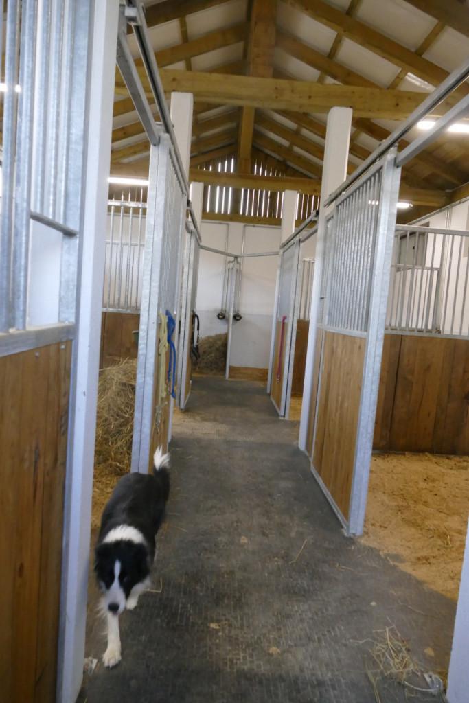 Novi hlev je opremljen tudi z gumo, ki blagodejno deluje na konjevo dobro počutje in zdravje.