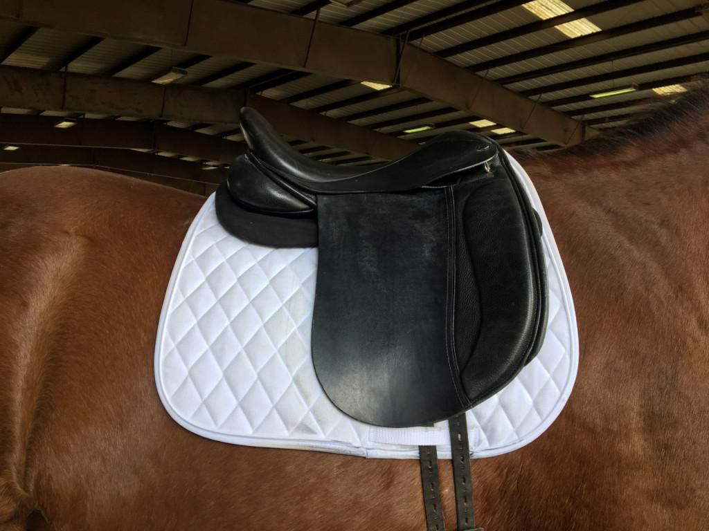 Nujno je tudi, da preverimo, ali se konju sedlo pravilno prilega. Pri tem se vedno obrnimo na strokovnjaka.