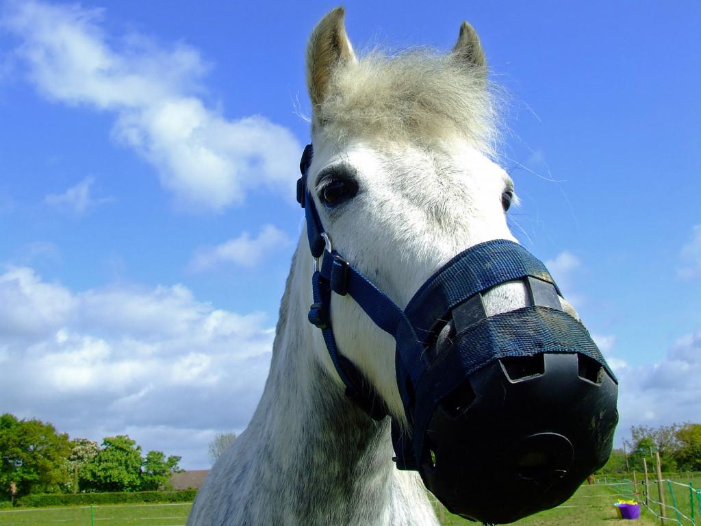Pašni nagobčniki pomagajo nekaterim konjem, pri drugih pa povzročajo visok nivo stresa, kar seveda ni priporočljivo. (Foto: Flickr.com)