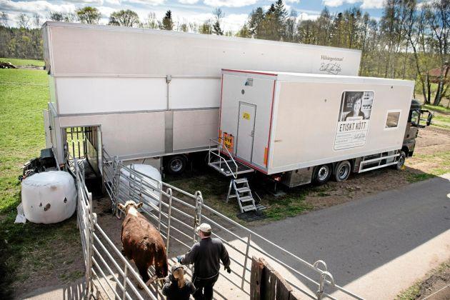Zaradi večjega povpraševanja po bolj etični prireji govejega mesa in humanem zakolu, je švedsko podjetje Hälsingestintan tudi v Franciji uvedlo svojo mobilno klavno enoto.  (Vir: fleischwirtschaft)