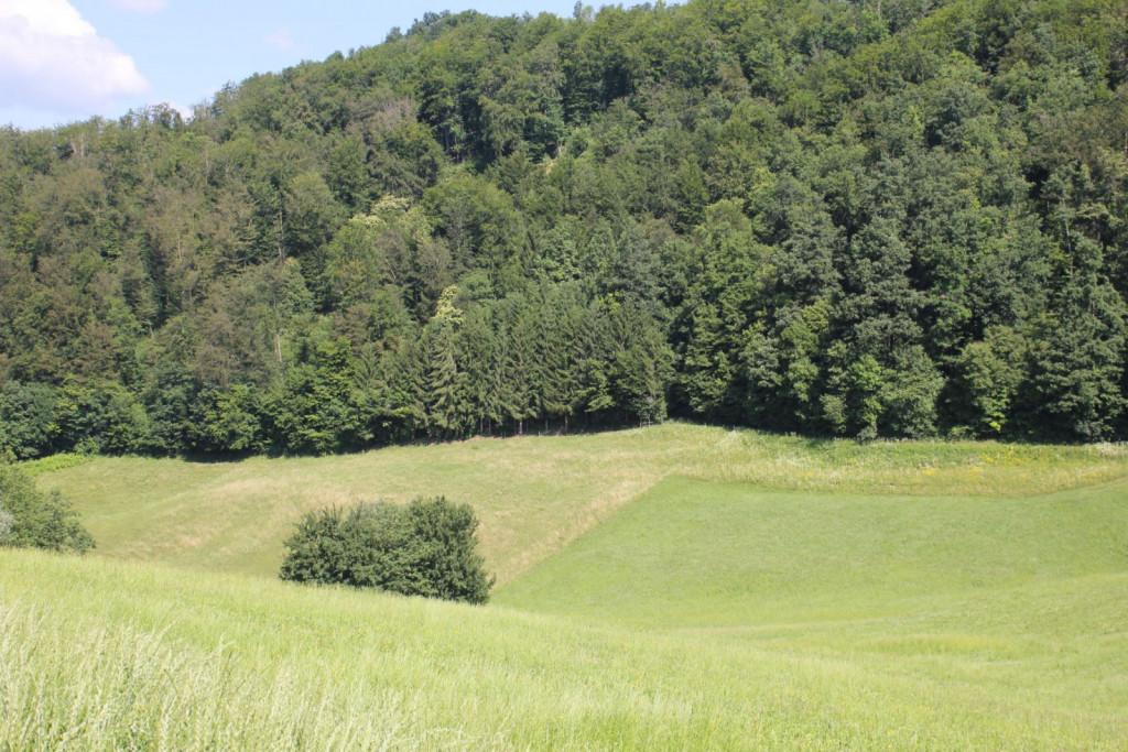 Površine so na območju z omejenimi dejavniki v sevniški občini, na nadmorski višini 380 metrov.