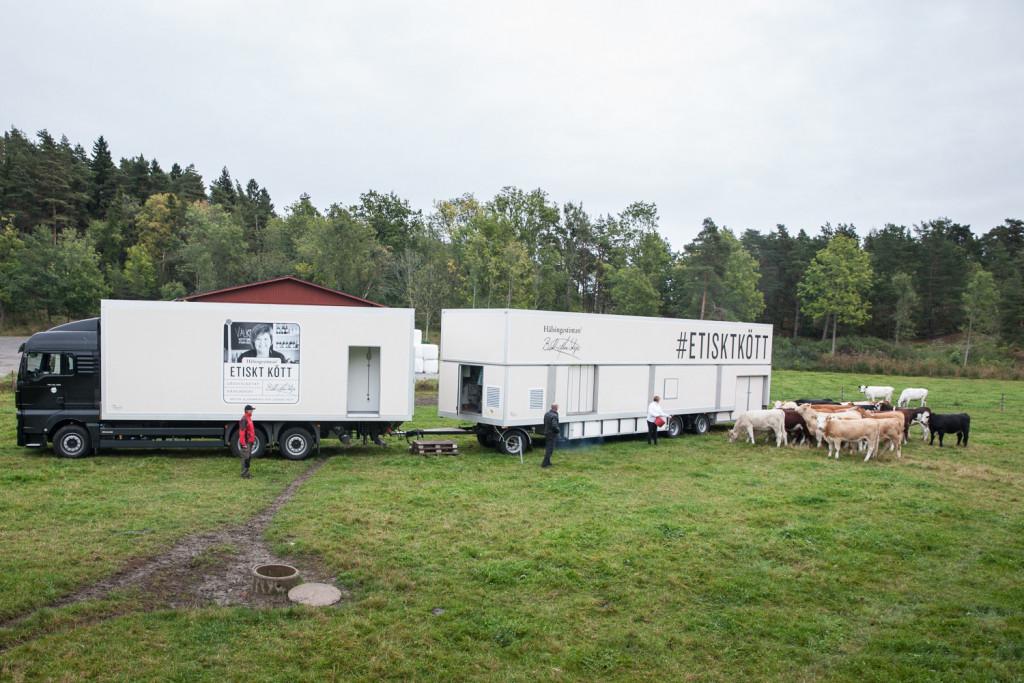 Mobilna klavnica za govedo na Švedskem Hälsingestintan, je bila na Švedskem predstavljena že decembra 2014 (vir: Hälsingestintan)