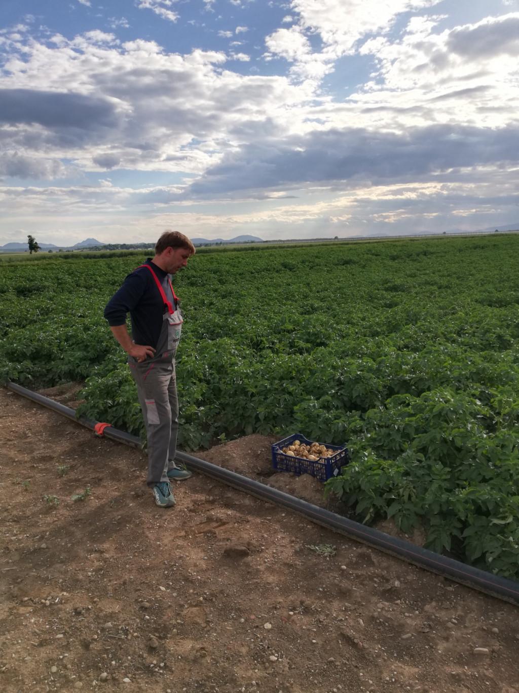 """Radko Firbas: """"Ker stremimo k pridelavi kakovostnega krompirja po naprej dogovorjenih količinah, nimamo težav sprodajo."""""""