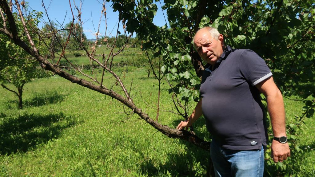 Tako se začne propadanje drevesa, ki ga najpogosteje ni mogoče rešiti.