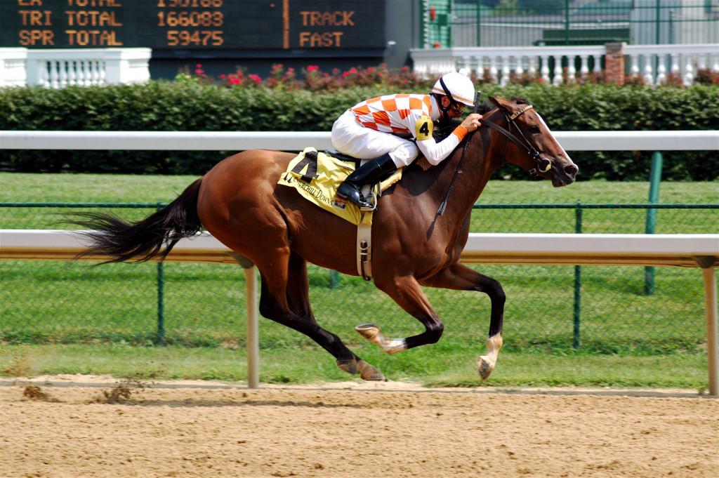 Hitrost se je pri konjih razvila šele kot posledica načrtovane vzreje.