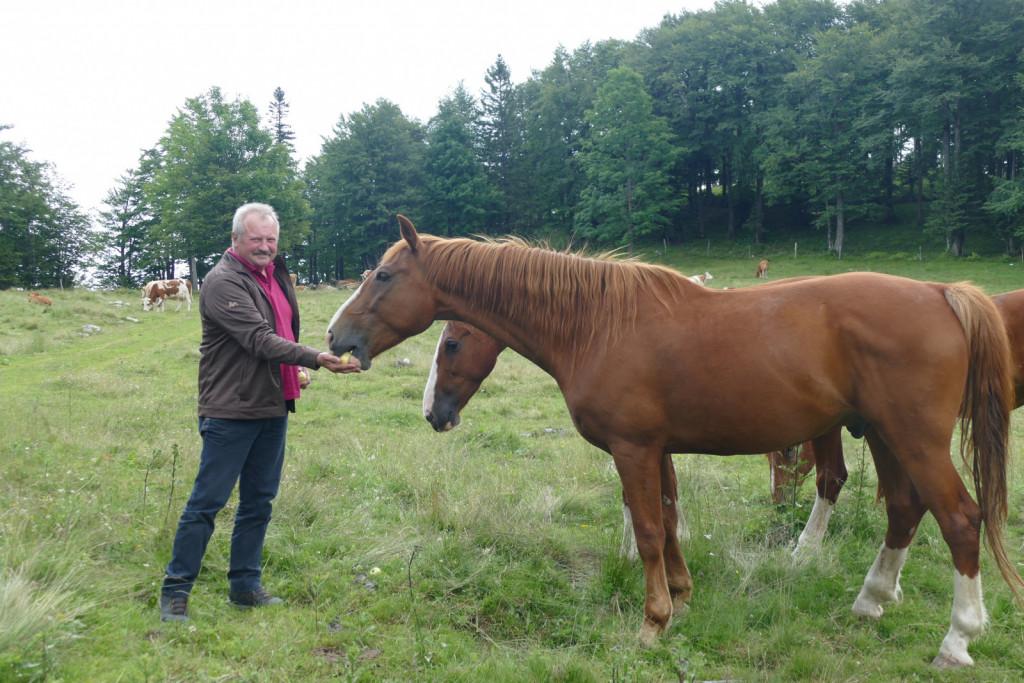 Konji so bili veseli jabolk.