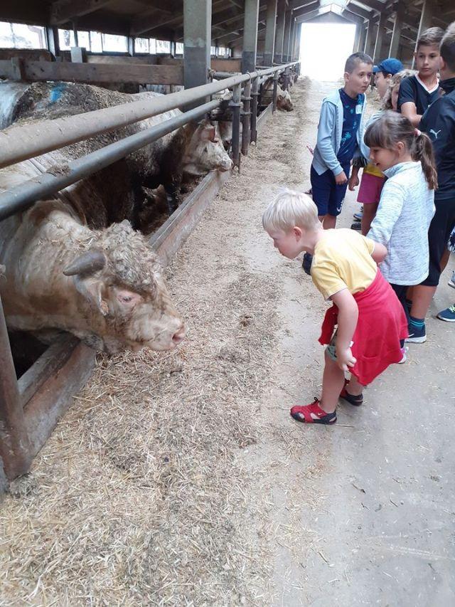 Tudi velike živali so lahko prijazne.<br> <br>