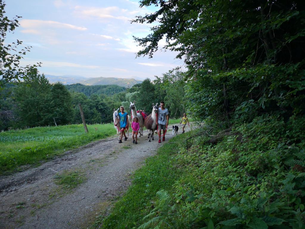 Na poni ranču Ogrizek izvajajo tudi trekinge z lamami, ki so za udeležence pravo doživetje.