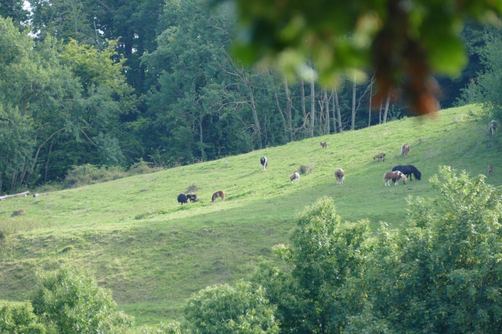 Ogrizkovi imajo okrog 16 hektarjev strnjene zemlje.