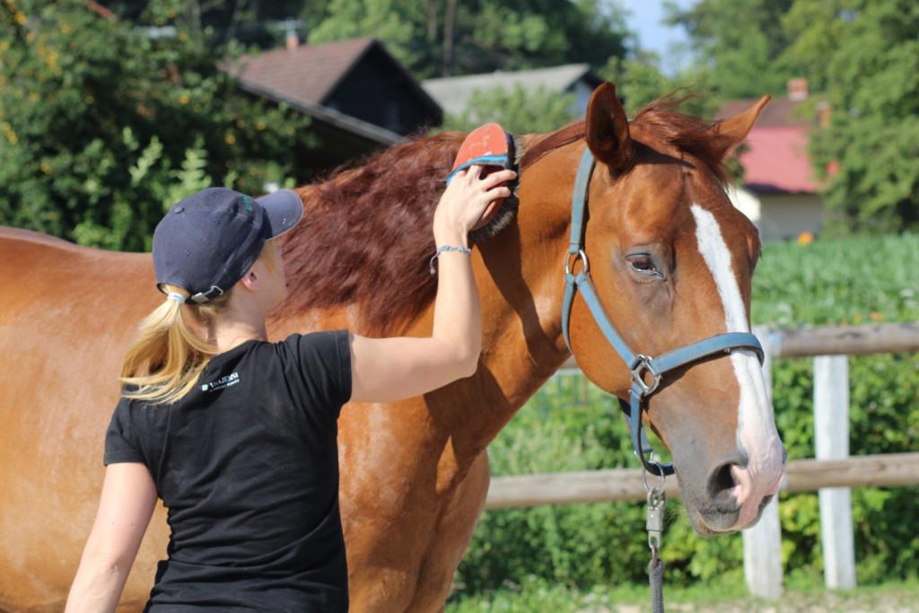 Krtačenje je predvsem pomembno z vidika ugotavljanja sprememb v konjevem zdravstvenem stanju.