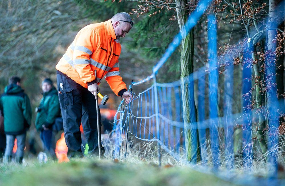Postavljanje električne ograje za odvračanje divjih prašičev je postavljena v Schirgiswalde-Kirschau na vzhodu Nemčije (foto: bloomberg)