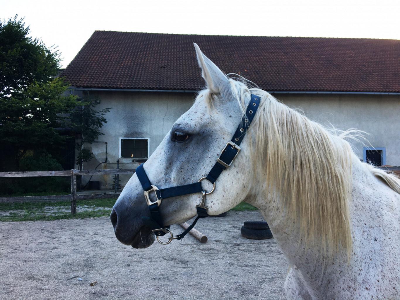 Kljub temu, da imajo starejši konji po navadi več zdravstvenih težav, so pogosto pravi zaklad. Z ustrezno skrbjo lahko poskrbimo za to, da bodo konji tudi v zrelih letih vitalni in zadovoljni.
