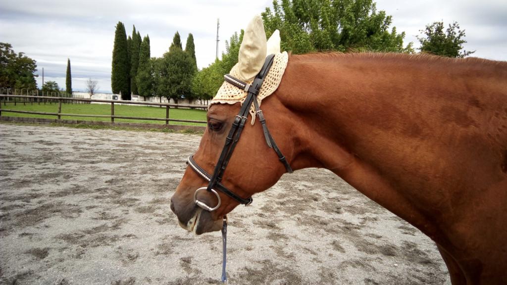 Jasen znak sproščenosti in potrditev, da je kontakt na lonži pravilen, je rahlo bela, spenjena slina na ustnicah konja. Slednje se včasih dogaja tudi, ko lonžiramo brez brzde.