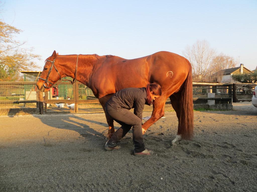 V praksi je vedno bolj v uporabi lonžiranje ali delo na tleh v kombinaciji z delom na konjevem telesu (bodywork) že med treningom. Kombinacija gimnastičnih vaj treninga s tehnikami dela na telesu omogoča hitrejši napredek pri sproščanju in aktiviranju konja. (Foto: Katja Porenta)