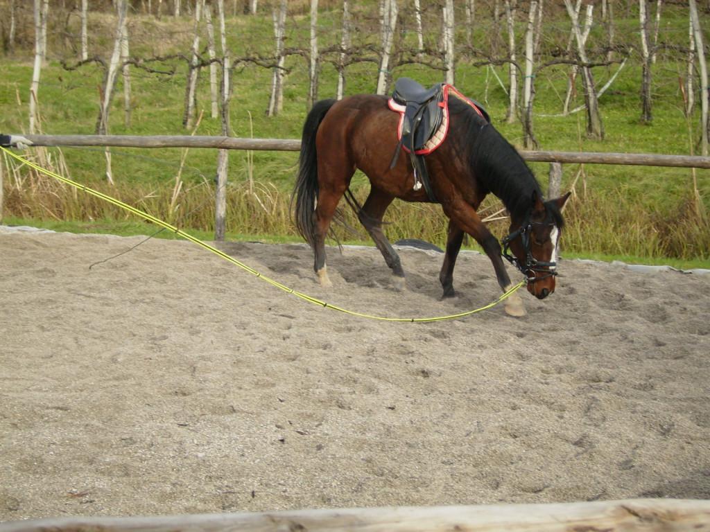 Pogosta začetniška napaka med lonžiranjem: lonža je brez kontakta, preveč popuščena. Konj preko takšnega kontakta slabše razume informacije, ki jih želimo posredovati preko lonže, kot so npr. polparade, ali celo stopi na lonžo in se poškoduje.